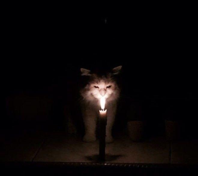 Caught My Cat In Ritual Of Summoning Satan