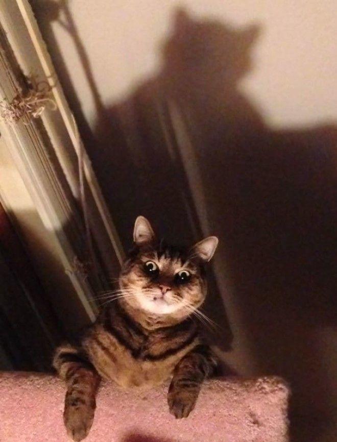 Spooky Kat