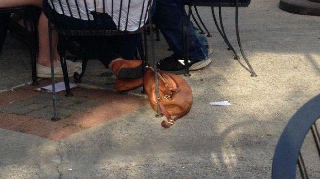 Sюди сперва думали что это просто спящая собака но когда они пригляделись