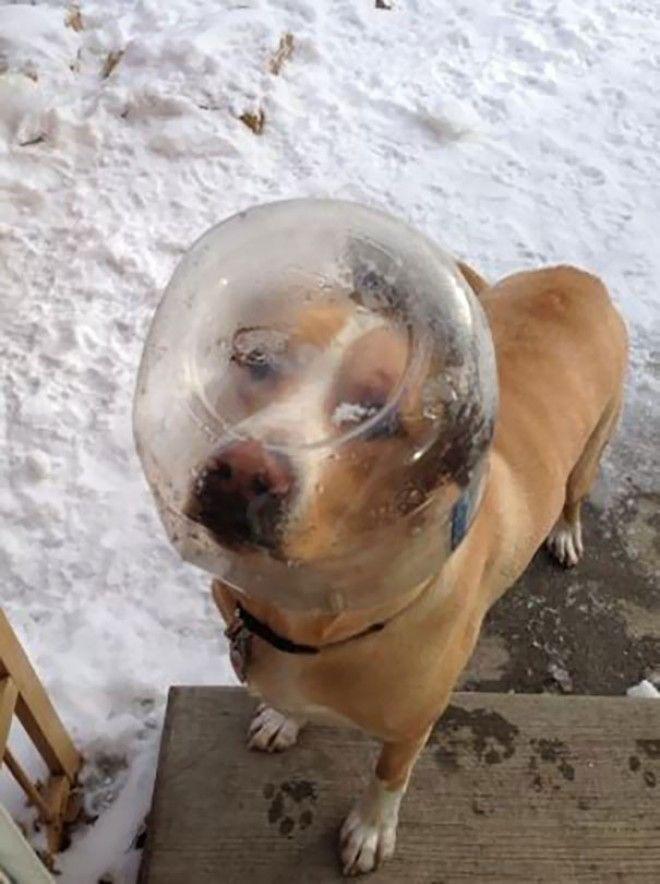 S проснулся и увидел это Люди делятся смешными и милыми фото своих животных