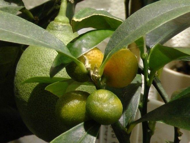 BНеожиданное полезное свойство авокадо