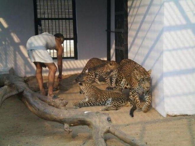 Детский дом для животныхсирот в Индии
