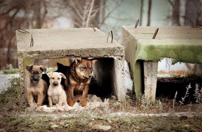 Как в Италии борются с проблемой брошенных животных