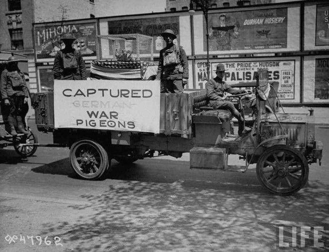 Роль военных голубей в Первой мировой войне
