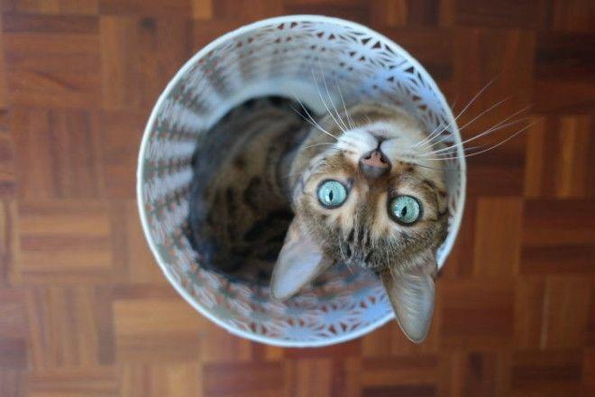 Эти кошки влезут куда угодно!
