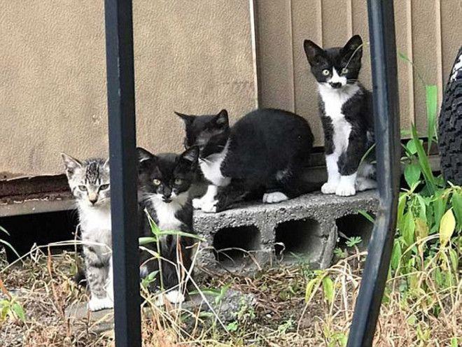 Котенок был замечен вместе со своими братьями и сестрами