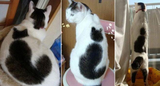 Окрас в виде силуэта кота