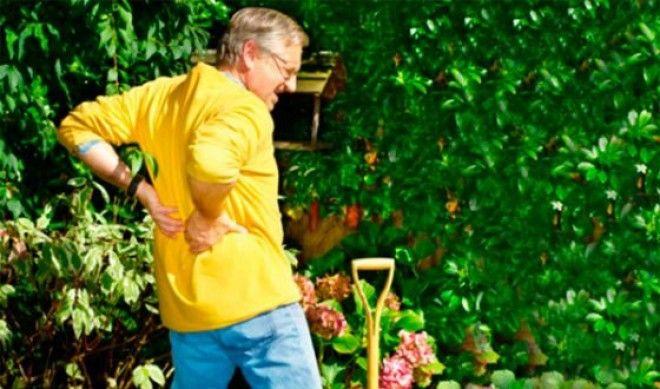 Некоторые пытаются лечить крапивой остеохондроз