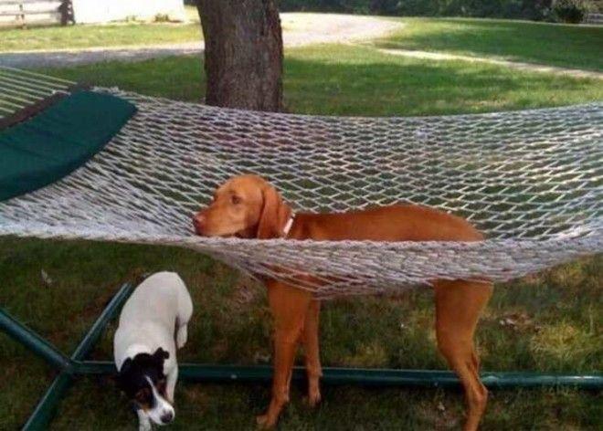 Картинки по запросу Это не гамак, это сети для собак!