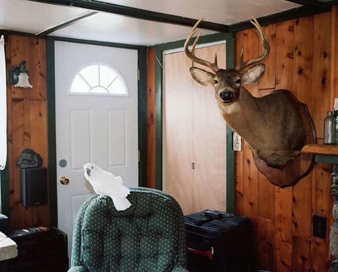 Необычные животные в американских семьях