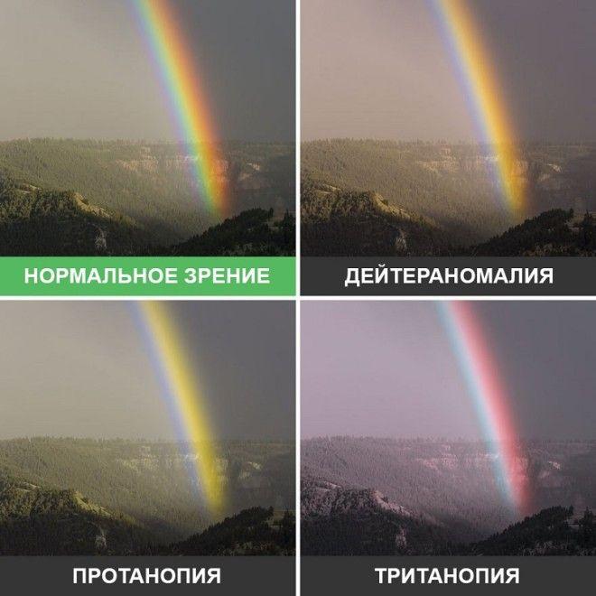 SBКак видят мир люди с разными дефектами зрения