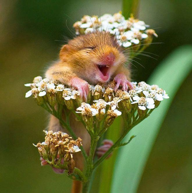 20 самых счастливых и улыбающихся животных которых засняли на камеру
