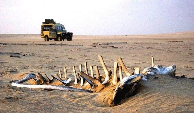 опасные туристические места туристические места опасные для жизни