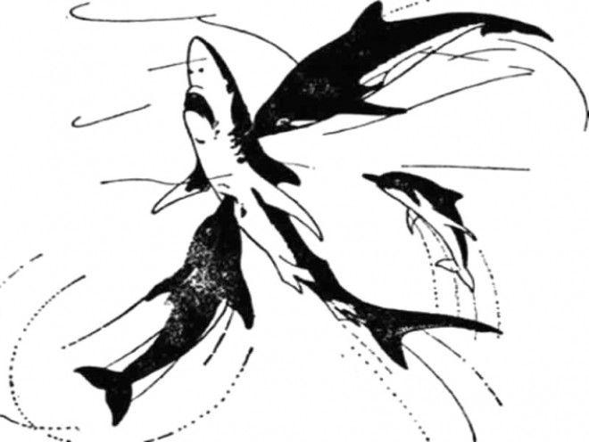 SПочему акулы боятся дельфинов