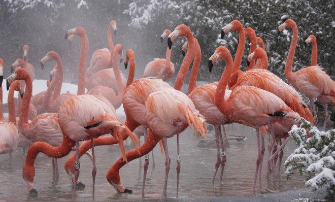Картинки по запросу flamingo