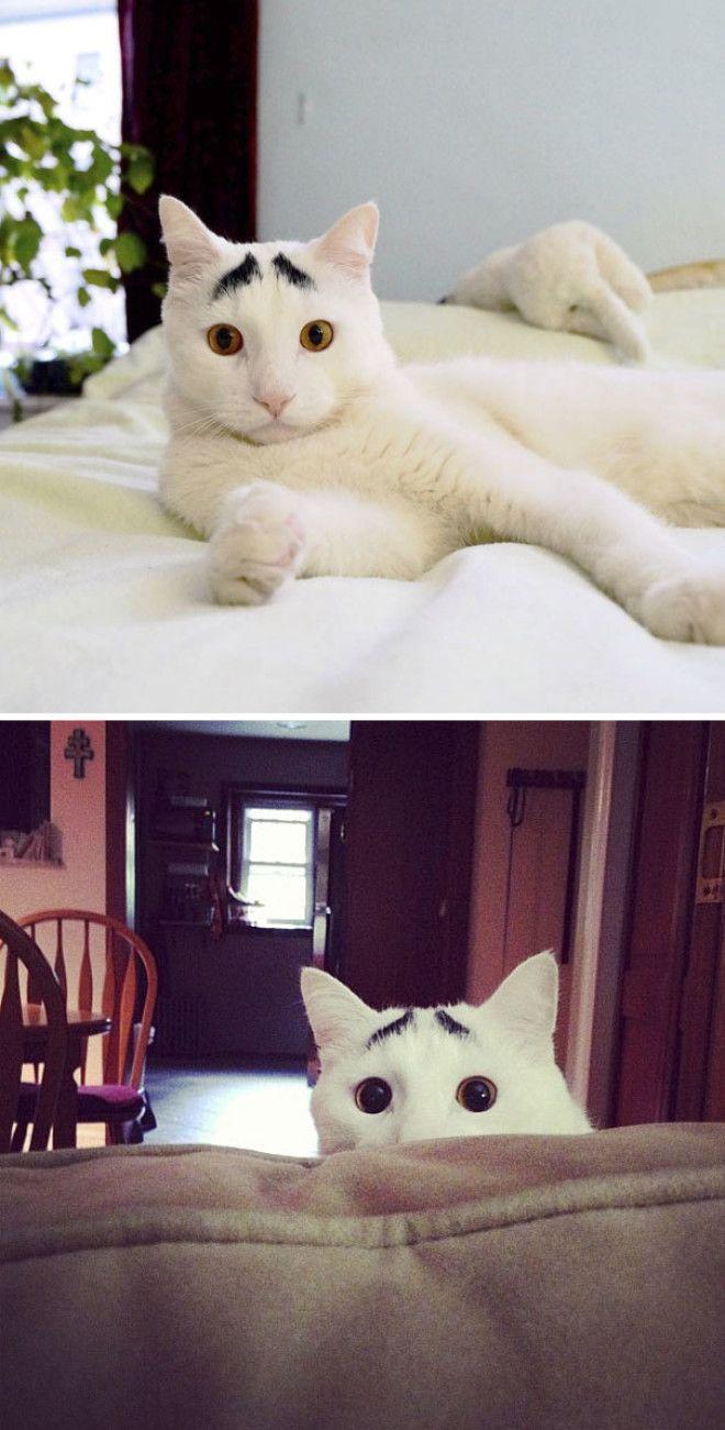 12 котов с безумным окрасом шерсти которые сделают ваш день