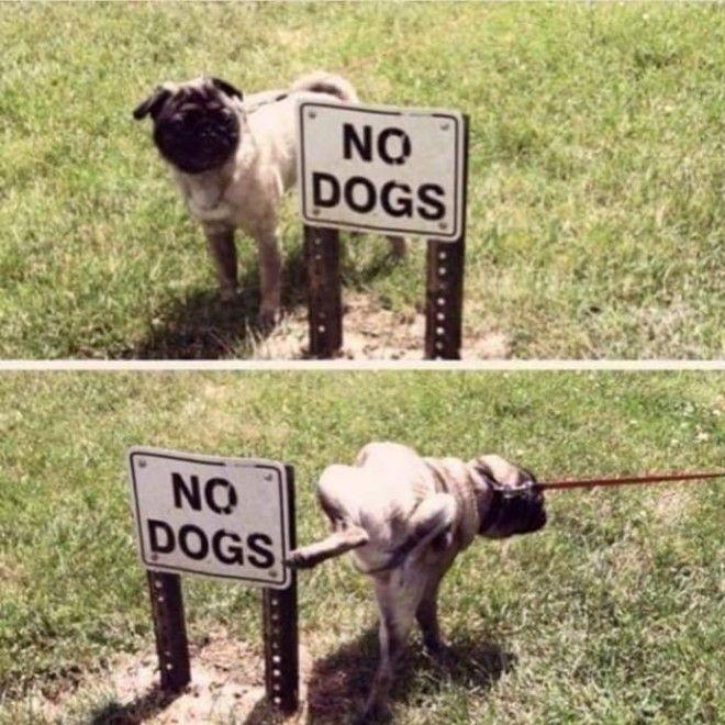 S6 забавных фотографий людей которые уверенно нарушают всевозможные правила