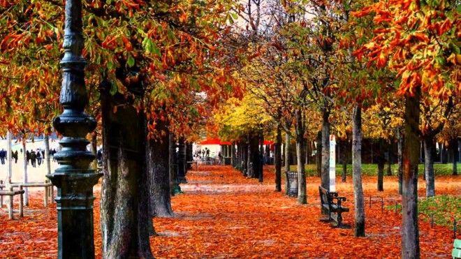 Картинки по запросу осень в париже