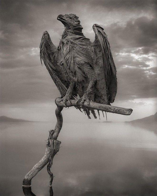 Убивать животных и превращать их в статуи природный феномен озера Натрон