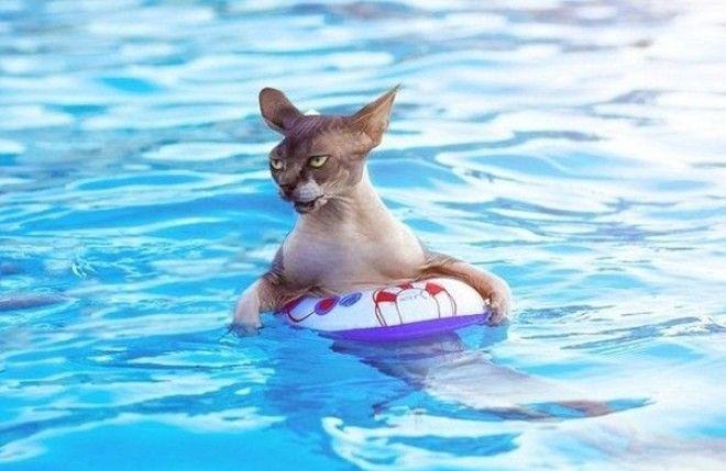 Картинки по запросу Почему кошки боятся воды