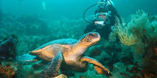 Куда поехать в октябре Галапагосские острова Эквадор