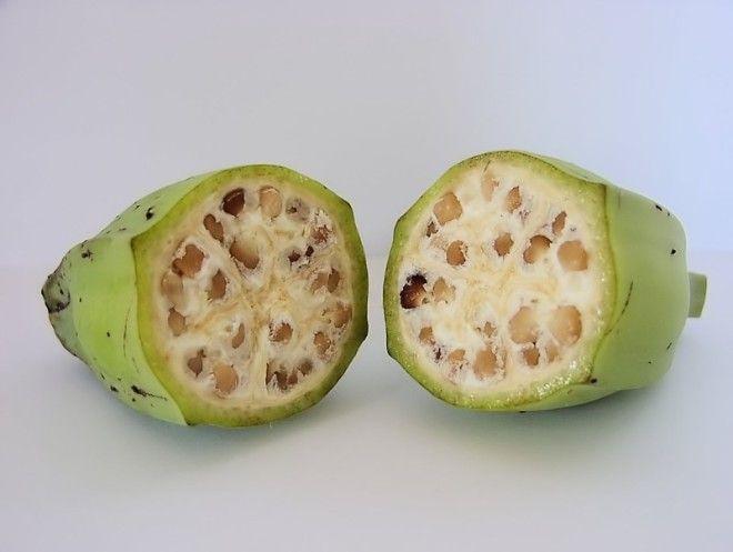 Дикий банан гмо овощи факты фрукты