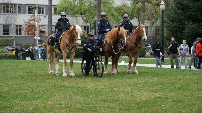 7 Этот полицейский явно на своей волне белые вороны забавно люди подборка прикол юмор