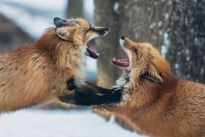 BЭти 12 зверей станут свирепыми хищниками ну а пока они невероятно милы