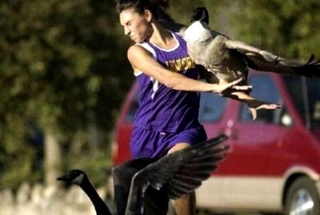 Нападение птиц