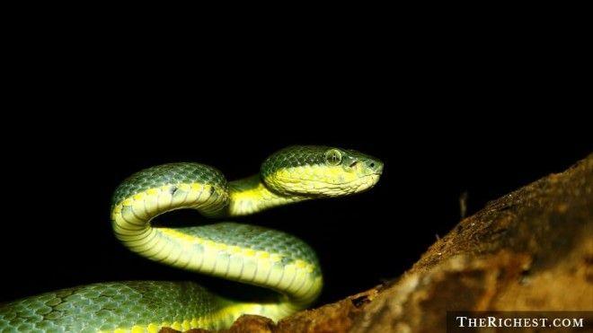 15 тревожных фактов о змеях которые вы предпочли бы не знать