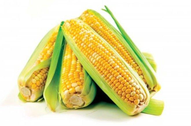 Современная кукуруза гмо овощи факты фрукты