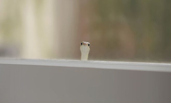 Found This Little Guy Peeking Through My Window