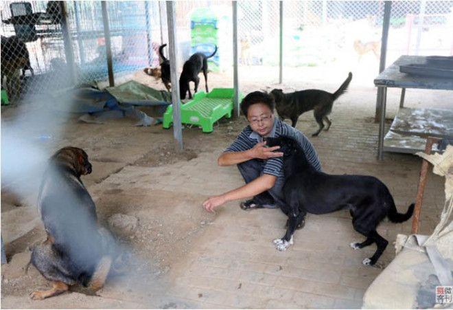 Как парень из Китая смог спасти более 700 собак