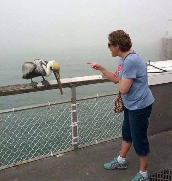 4 А эта женщина ругает пеликана Интересно он её вообще понимает белые вороны забавно люди подборка прикол юмор