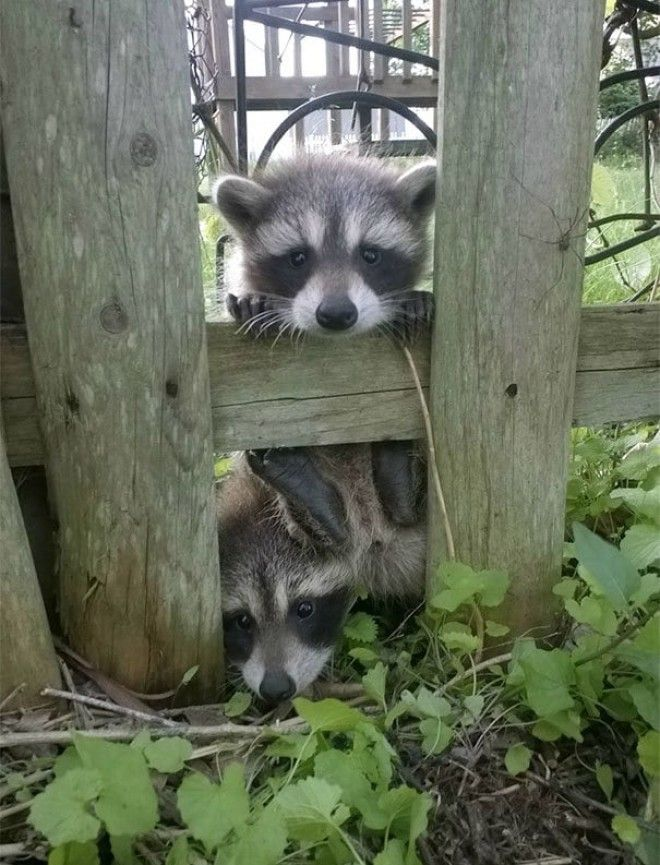 I Just Moved In And Some Neighbors Came By To Say Hi