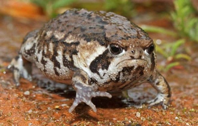 Grumpy Toad Does Not Want His Photo Taken