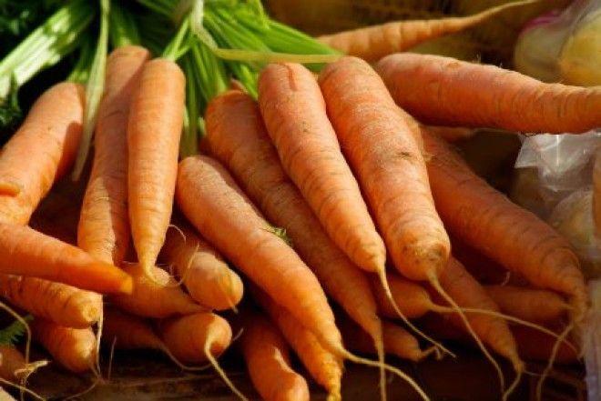 Современная морковь гмо овощи факты фрукты