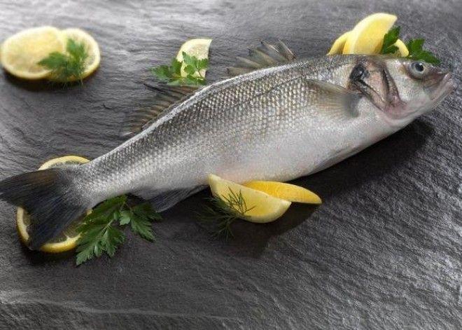 SB7 видов рыбы которые лучше не есть
