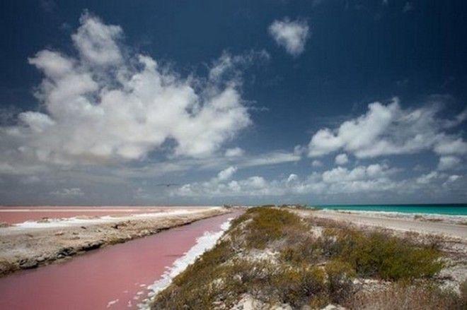 Розовый пляж Бонайре