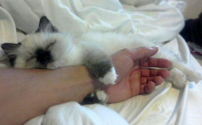 Картинки по запросу котик обнимает