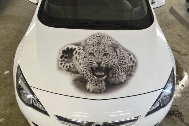 Рисунок леопарда на виниловой пленке наклеенной на капоте Фото pikaburu