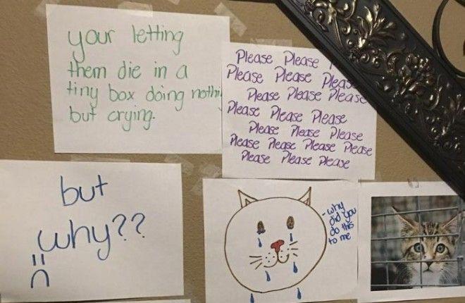 стена скорби чтобы завести кошку девочка сделала стену скорби девочка выпросила кошку как выпросить завести кошку