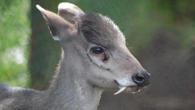 15 фото редких животных доказывающих что природе ещё есть чем нас удивить