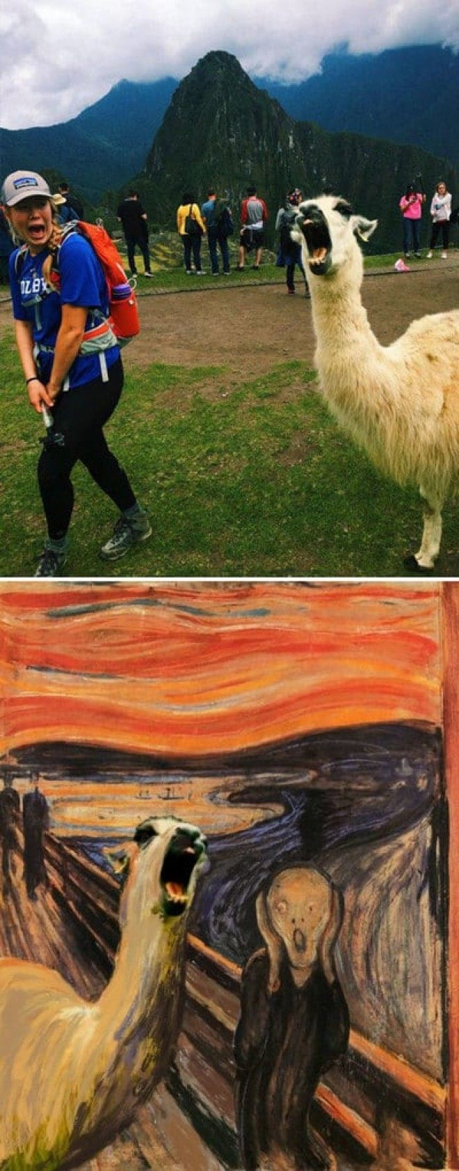Screaming Llama