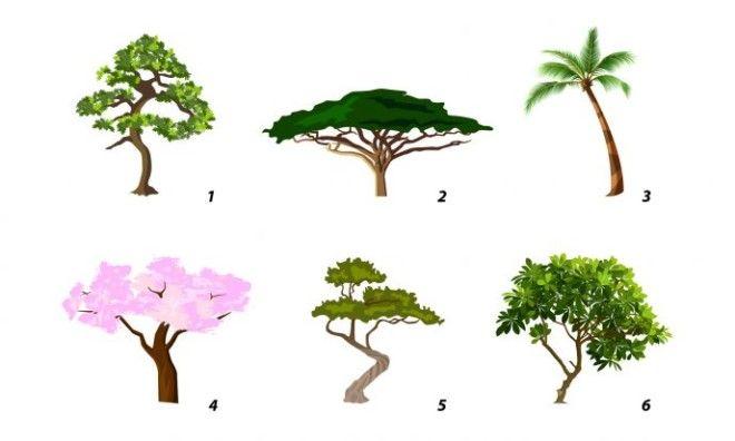 SВыберите дерево и узнайте свою доминирующую черту характера