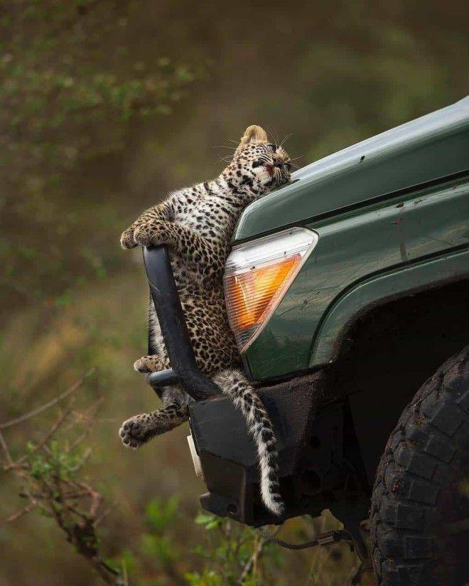 15 фотографий животных которые внезапны как дрель в женской сумочке