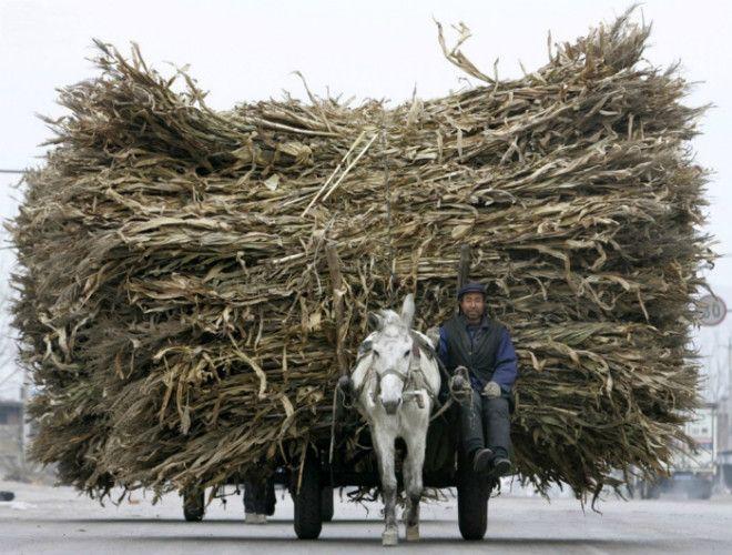 Несчастная лошадка