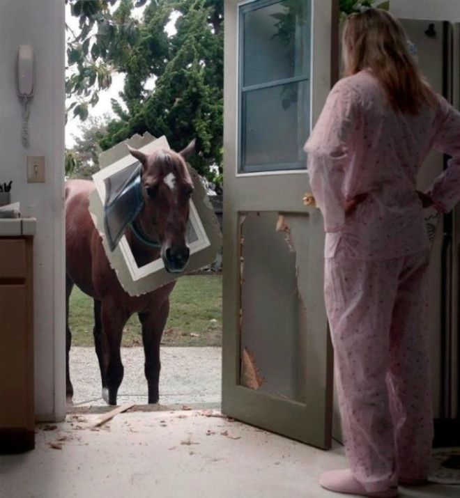 Непутевая лошадка