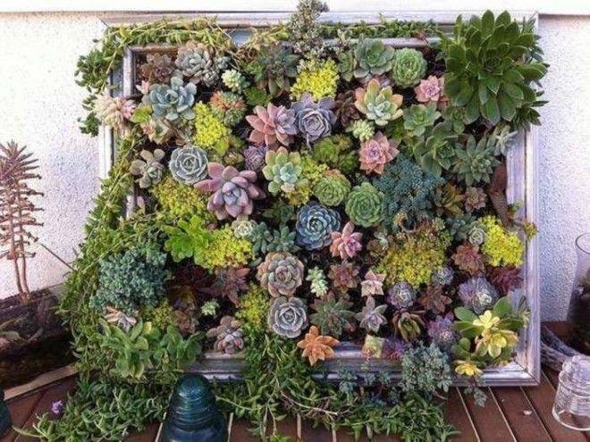 Живая стена из суккулентов это пожалуй наиболее удивительный предмет из всех поделок для дома которые можно изготовить своими руками