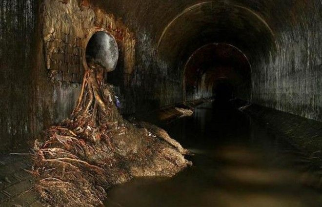 Главное помнить для чего предназначена канализация